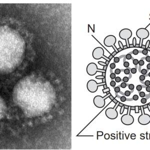 ピュアステラ「新型コロナウイルス/新型肺炎」の感染予防への効果??(弊社の見解)